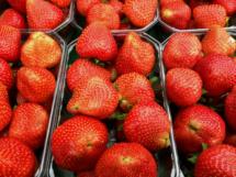 Erdbeeren 10 x 500 g Nahaufnahme 2