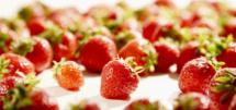 Erdbeeren Fotoshooting Fuchs 2020