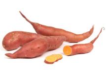 Süßkartoffel Fotoshooting 2 Fuchs 2020
